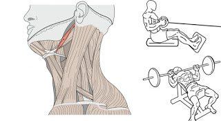 【共働筋と拮抗筋】末端との連動性も知り合理的な筋トレをする