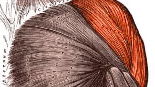【三角筋のジム筋トレ】肩の前部・中部・後部それぞれのマシンでの鍛え方