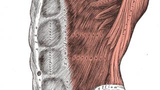 【腹筋を割る部位別筋トレ】腹直筋・腹斜筋の鍛え方と適切な体脂肪率