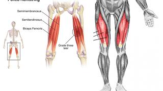 【下半身の部位別筋トレ】大腿四頭筋・ハムストリングス(大腿二頭筋・半腱様筋・半膜様筋)の鍛え方