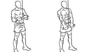 【ケーブルプレスダウン】アタッチメントにより効果のある上腕三頭筋の部位の違い