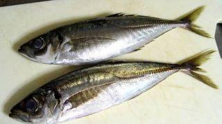 【筋トレ食事にはアジがおすすめ】栄養とコストバランスに優れた魚