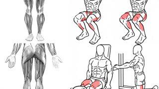 【下半身筋トレでのつま先の向き】足首それであってる?大腿筋・下腿筋との連動性が大切