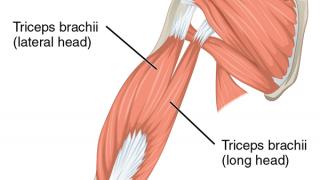 【上腕三頭筋短頭の鍛え方】U字型の美しい腕を作る筋トレ方法を解説
