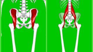 【腸腰筋の鍛え方】競技に重要な股関節インナーマッスルの筋トレ方法