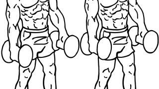 【ダンベルショルダーシュラッグ】僧帽筋の基本自宅トレーニングを解説