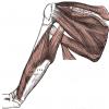 【肩部筋肉の名称と作用】上肢帯筋群の全筋肉を解説