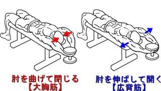 【ダンベルプルオーバー】その肘の角度であってる?大胸筋と広背筋への効かせ方の違い