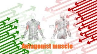 【スーパーセット法】胸・背中・肩・腕・脚それぞれの具体的なメニューセットの組み方と順番