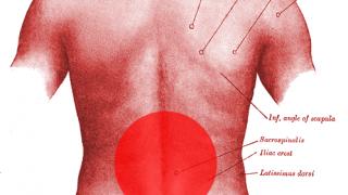 【腰痛を改善する3つの筋トレと柔軟】急がば回れで共働筋と拮抗筋を鍛える方法