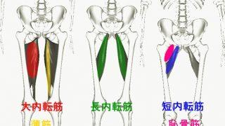 【内転筋の鍛え方】内ももを引きしめる筋トレ方法を解説